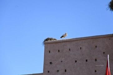 Maroc (119)